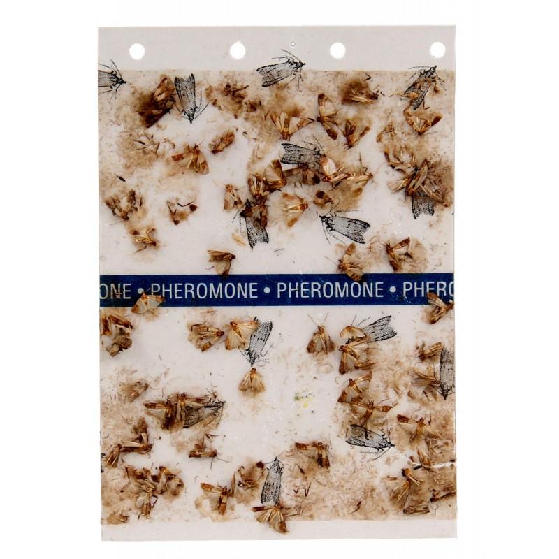 Subito - Piège à Mites alimentaires plaquette de phéromone femelle Plaquette | Insecticide Antinuisible